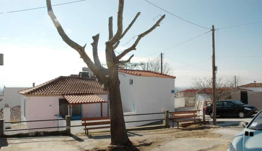 kimmeria-platanos